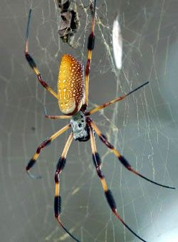 How to kill spiders house cleaning mesa az 85207 for How to stop spiders entering your house