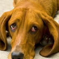 How To Clean Dog Poop From Carpet In Louisville Co 80027