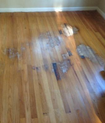Pet stains and hardwood floors for Hardwood floors good for dogs