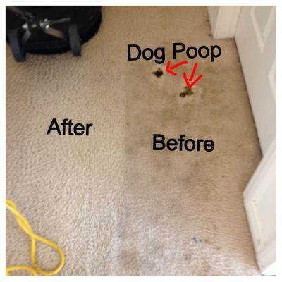 Best Carpet Cleaner For Dog Diarrhea